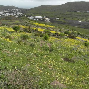 Wandern Lanzarote Tour 2